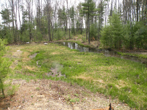 A wetland mitigation site photographed after its first winter.